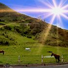 Panorama Of Horses Near Nabon by Al Bourassa