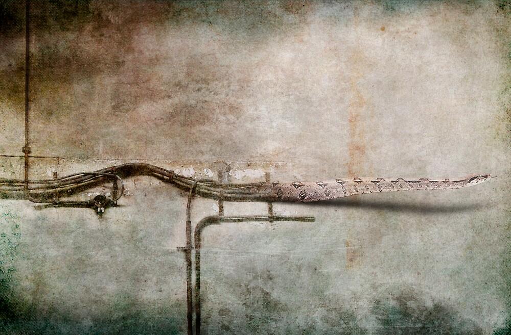 The Pipeline by dalmar