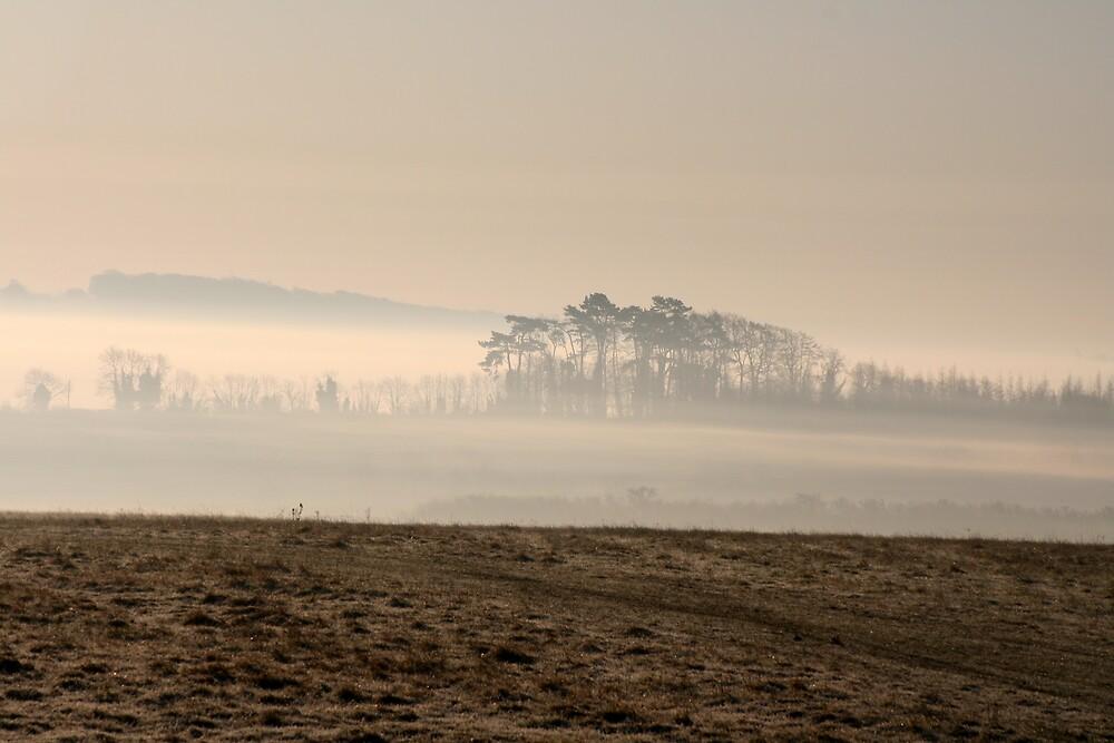 One Misty Moisty Morning - 1 by Martin Carr
