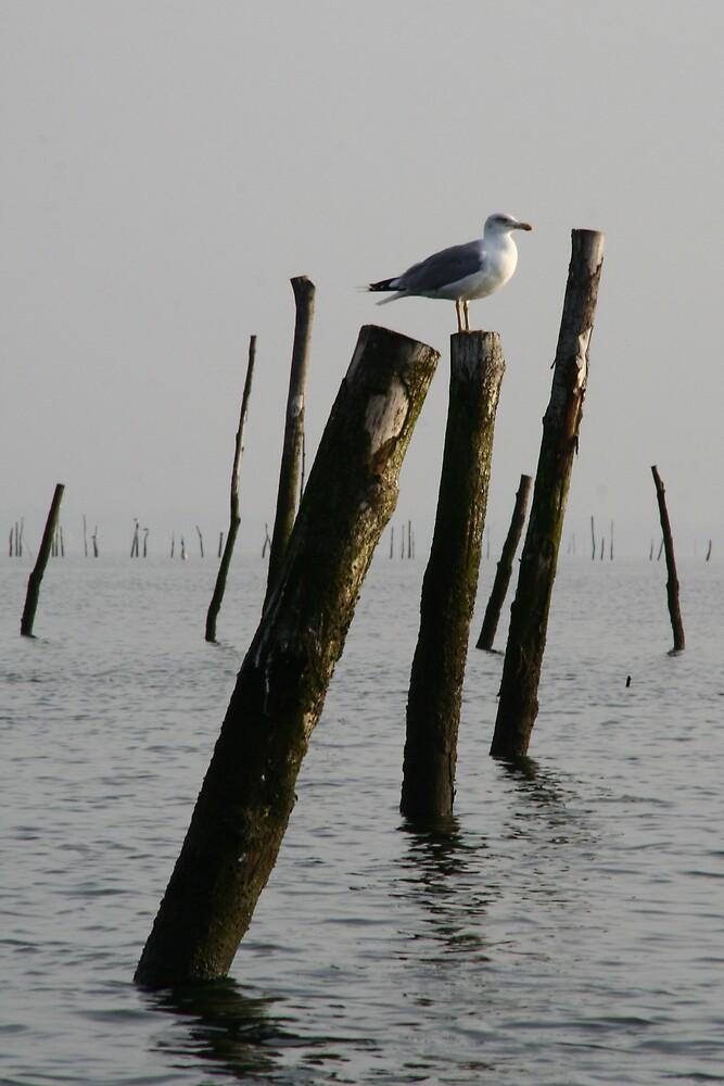 gull by Elodie