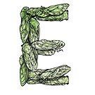 Love Letters: E (cicada) by Rhea Ewing