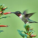 Hummingbird & Cigarette Plant by TJ Baccari Photography