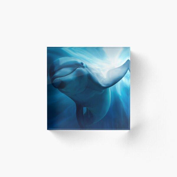 Dolphin Acrylic Block