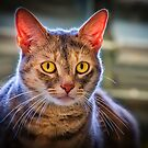 Meeka with the Yellow Eyes by TJ Baccari Photography