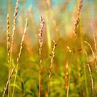 2017 Summer Grass 1 by vigor
