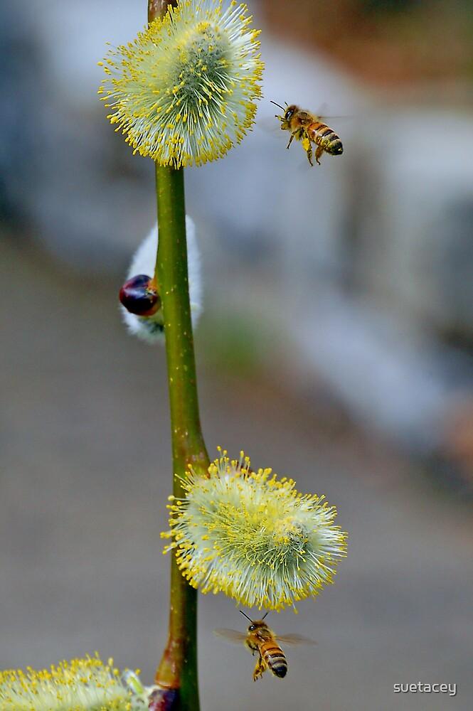buzy bees by suetacey