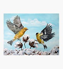 Golden Finches Picking Cotton Photographic Print