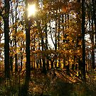 Rising Morning Sun in the Blue Ridge Mountains of Virginia by Larry Llewellyn
