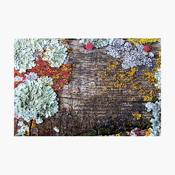 Lichen Playground Photographic Print