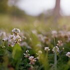 White Clover in Film by Rachael Martin