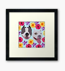 Pit Bulls With Flowers  Framed Print
