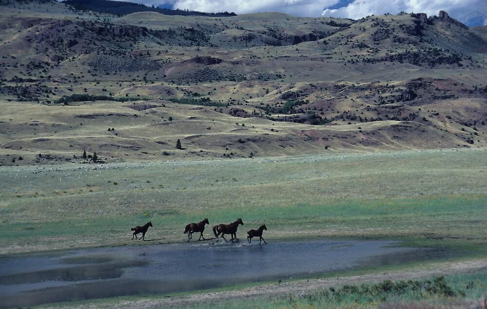 Free Horses in Montana by bertspix