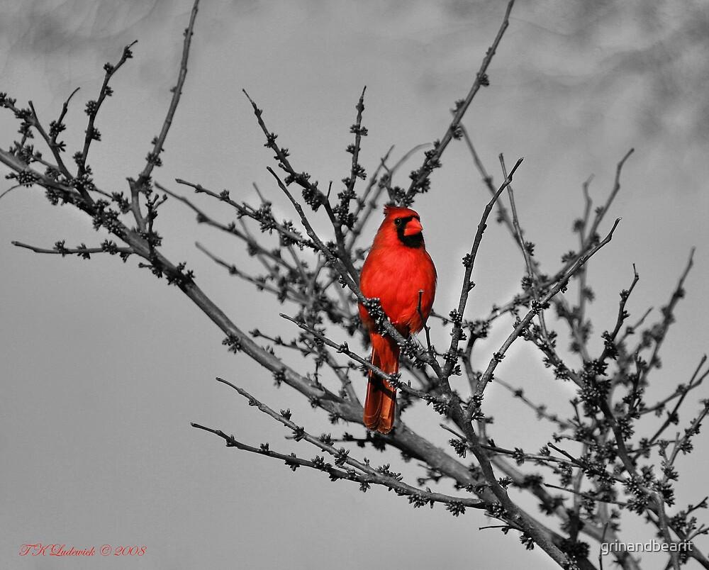 Cardinal by grinandbearit