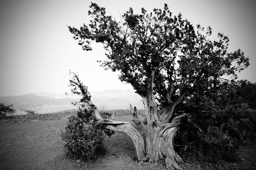 Tree by Janina