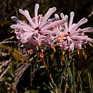 Pink - Petrophile by Paul Gilbert