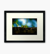 Small Life ... Big World Framed Print