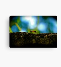 Small Life ... Big World Canvas Print