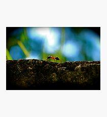 Small Life ... Big World Photographic Print