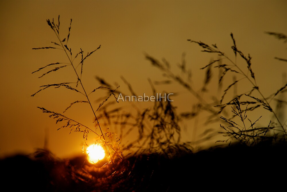 Fields of Gold by AnnabelHC