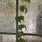Weeping Window by AnneDB
