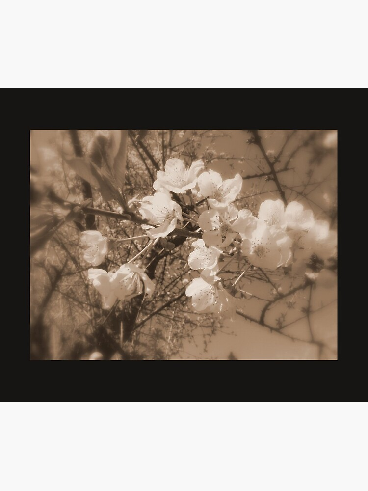 cherry blossoms in the sky, sepia by DlmtleArt