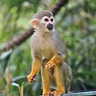 Squirrel Monkey by Vicki Spindler (VHS Photography)