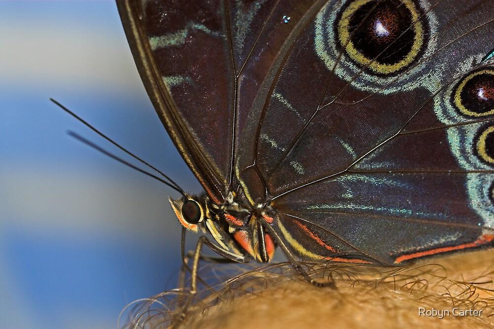 Owl Butterfly Macro by Robyn Carter