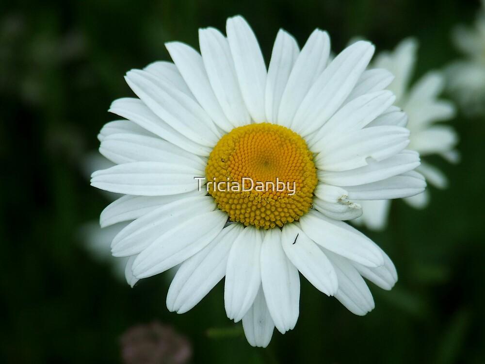 Little daisy by TriciaDanby