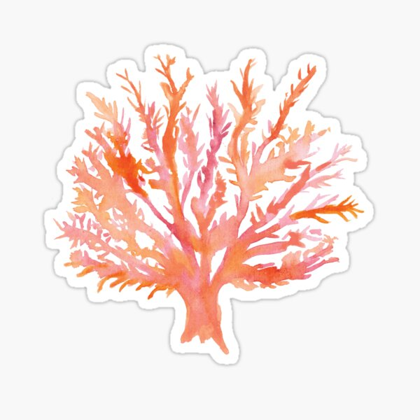 Coral - Watercolour - Great Barrier Reef Sticker