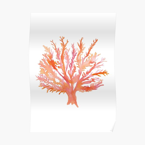 Coral - Watercolour - Great Barrier Reef Poster