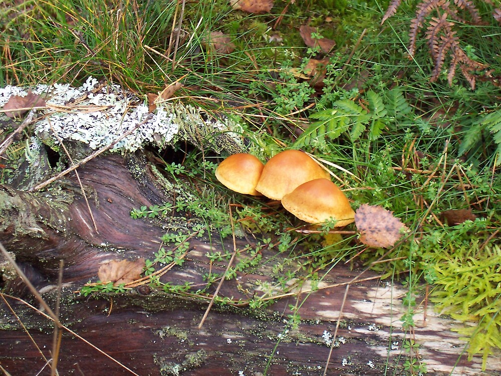 forest fungi 1 by flower7027