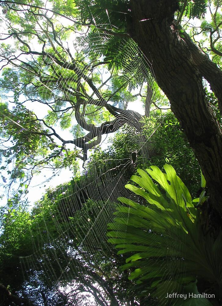 Web Forest by Jeffrey Hamilton