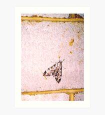 Mothy Wall Art Print