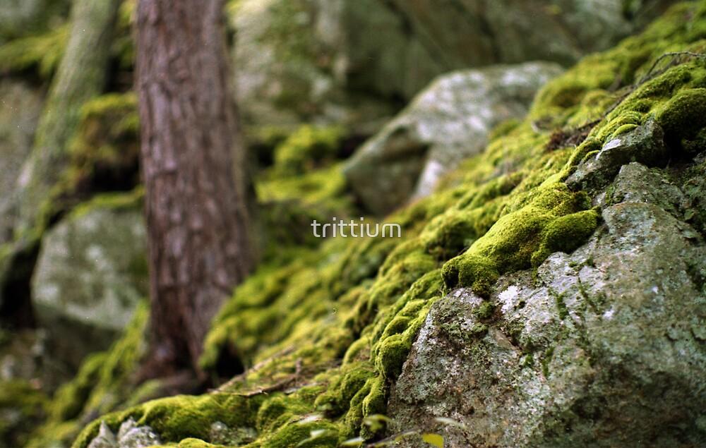 Flowing Moss by trittium