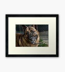 Butch the Friendly Dog Framed Print