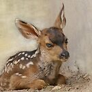 Day Old Fawn by Betsy  Seeton