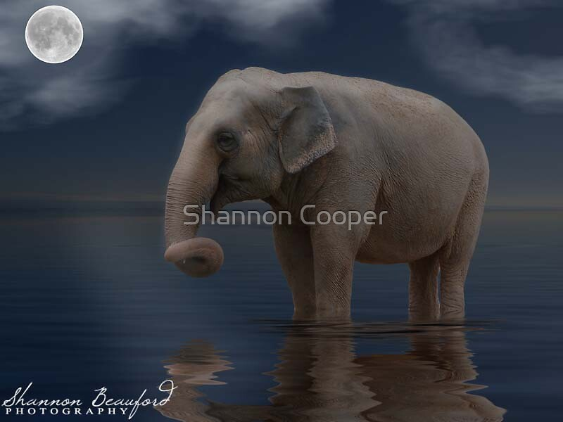 After the Rain on the Savanna by Shannon Beauford
