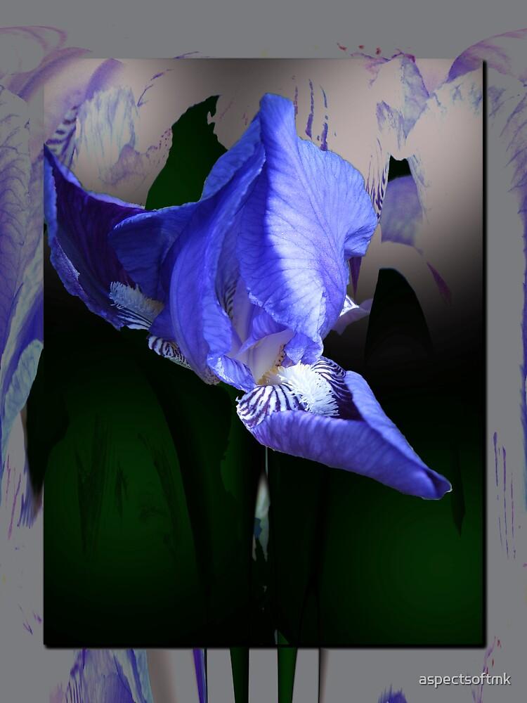 splash of iris by aspectsoftmk