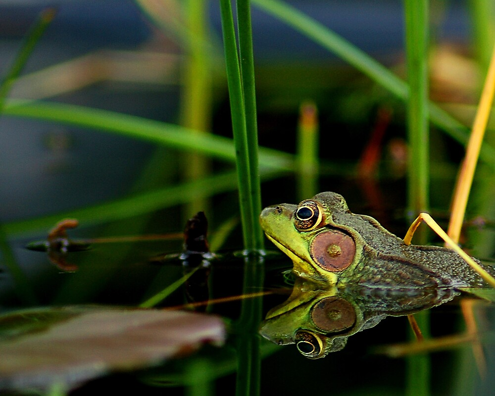 Frog in Paradise by Angelica Miller