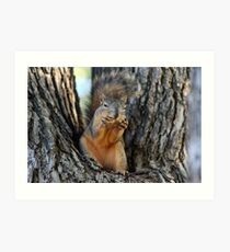Squirrely Squints Art Print
