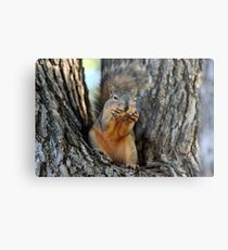 Squirrely Squints Metal Print