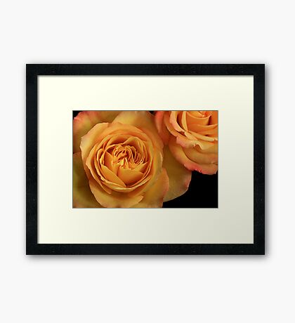 Circus Rose Framed Print