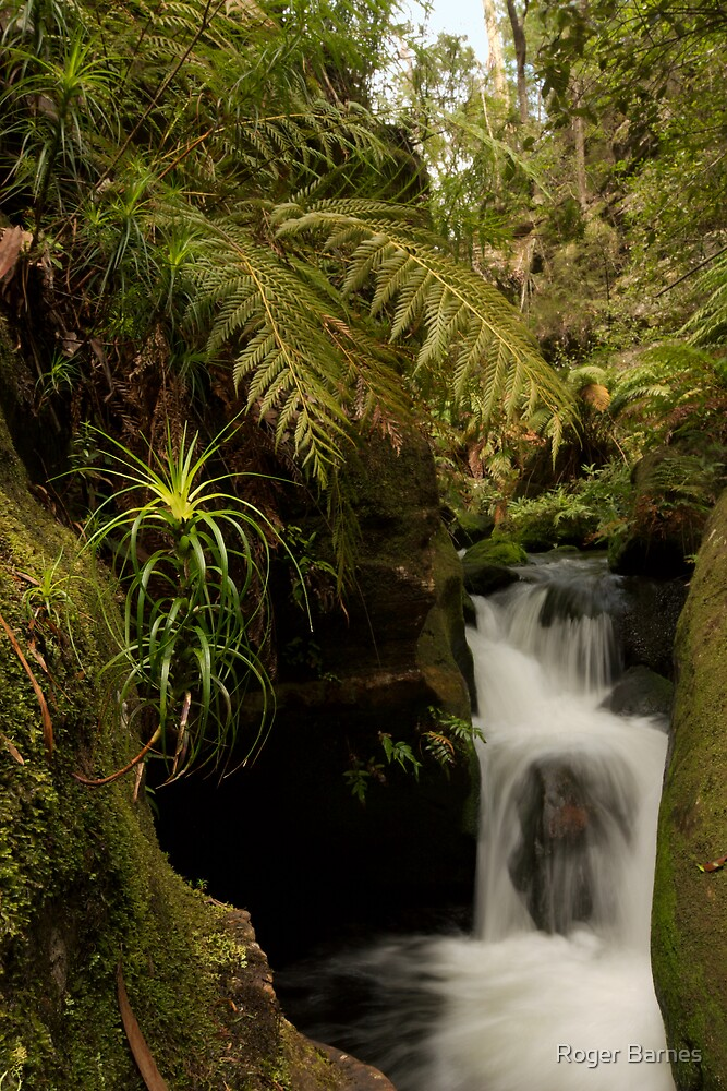Rocky Creek Canyon, Blue Mountains by Roger Barnes