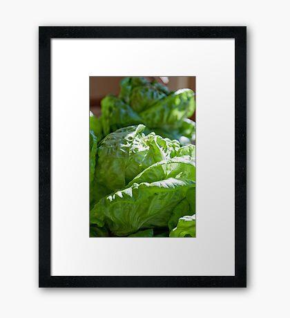 Lettuce for a BLT Anyone Framed Print