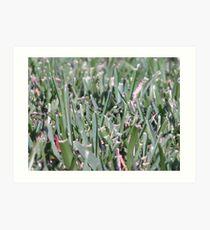Sharp Grass Art Print