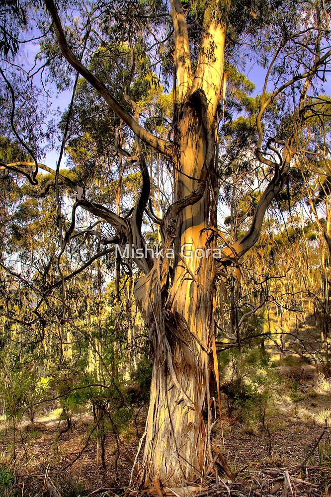 Gum Tree by Mishka Gora