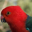 King Parrot by SharonD