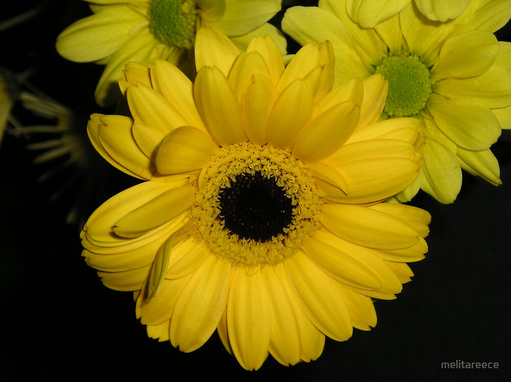 Yellow Daisy by melitareece