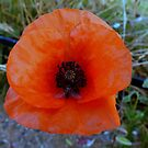 Poppy and friend. by Livvy Young