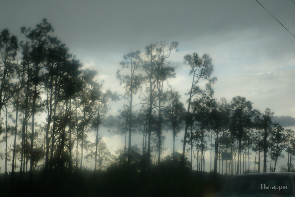 """""""Silent Trees"""" by lilsnapper"""